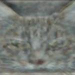 G ai cats